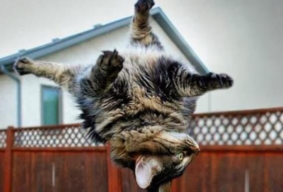 Как кошке удается всё время падать на лапы