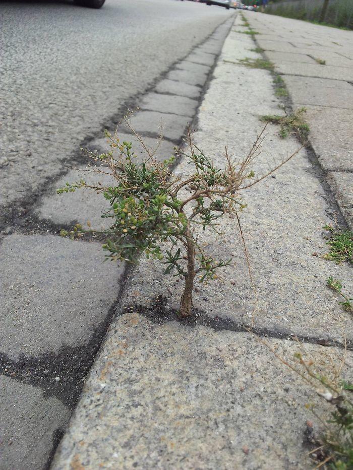 Миниатюрное деревце на тротуаре дерево, живучесть, жизнь, мир, планета, растительность, фото