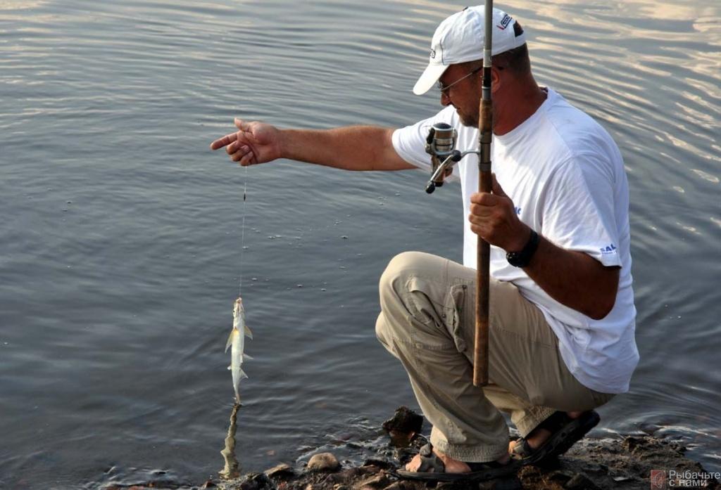 как сохранить опарыша до следующей рыбалки