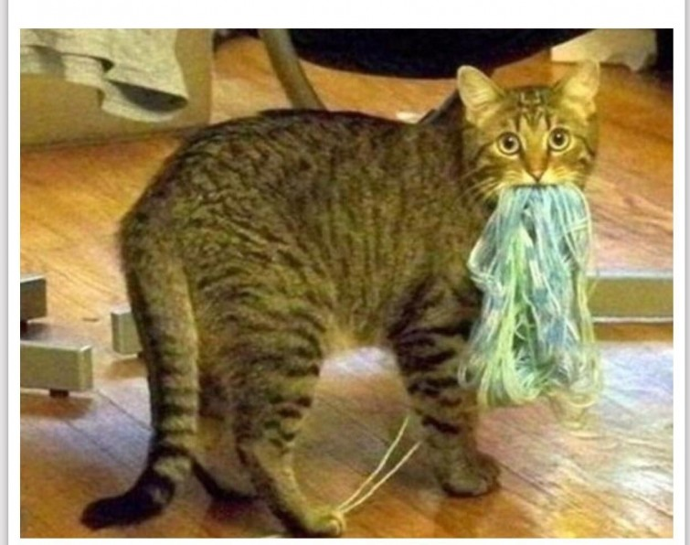 """""""Я хотел связать вам свитер. Честно"""" гифки, животные, кошки, приколы"""