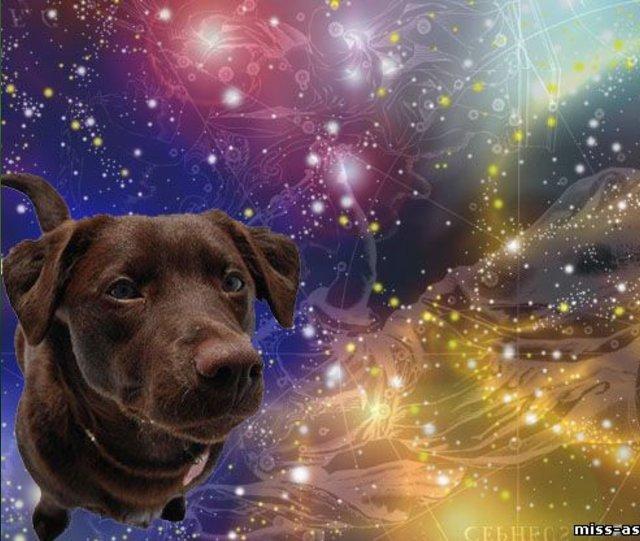 Какая вы собака по гороскопу. Что означают наши рисунки или о чем говорит подсознание?