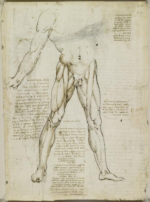 Рисунки с анатомическими эскизами. Леонардо да Винчи.