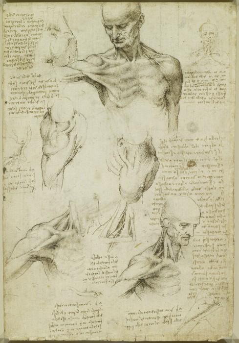 Мало кто знал о том, что именно анатомия была особым пристрастием Леонардо да Винчи.