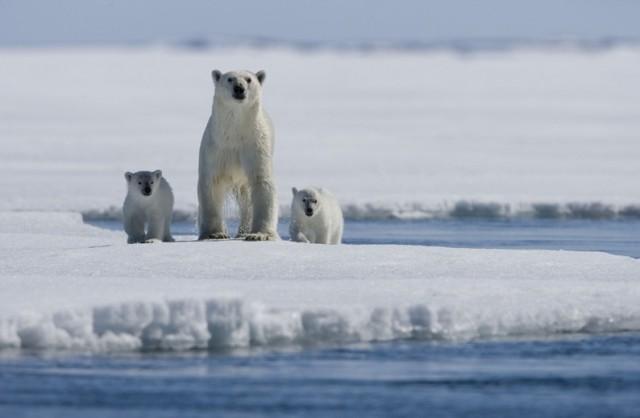 Примерно треть всей арктичес…
