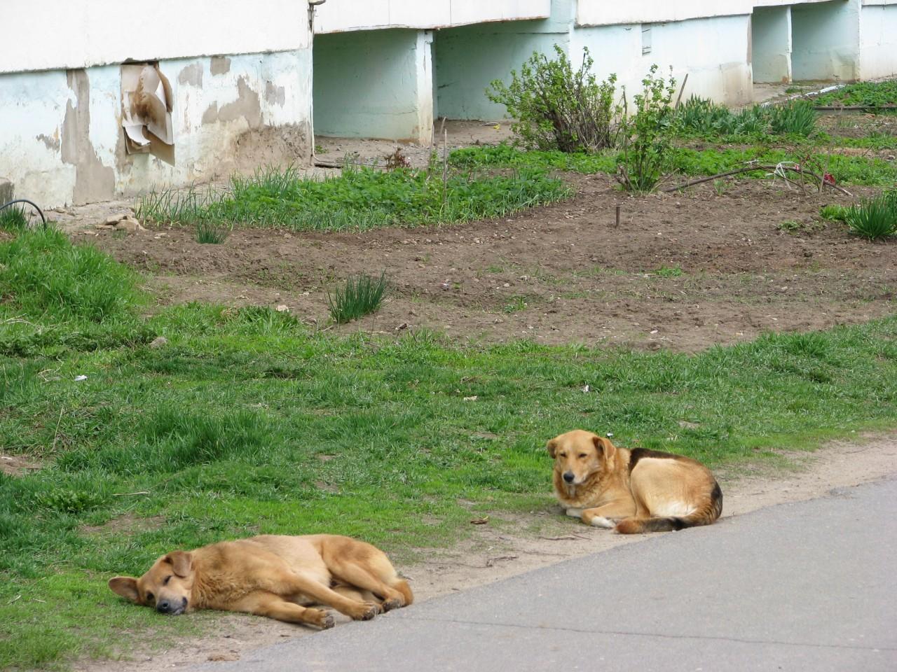Братья наши меньшие: жила-была собака Альфа