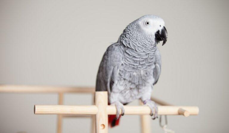 Выпросила дочка попугайчика. Папа пошел с ней в зоомагазин и купили жако...