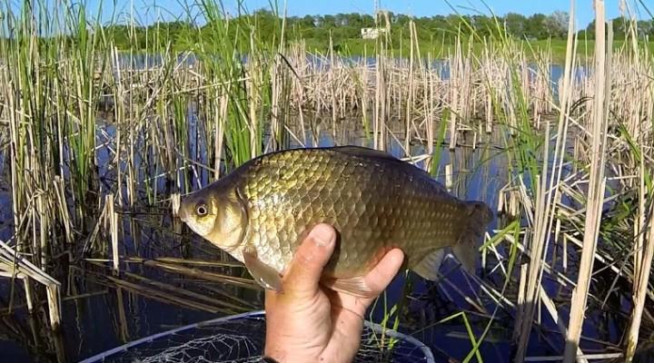 рыбалка от михалыча убийца карася