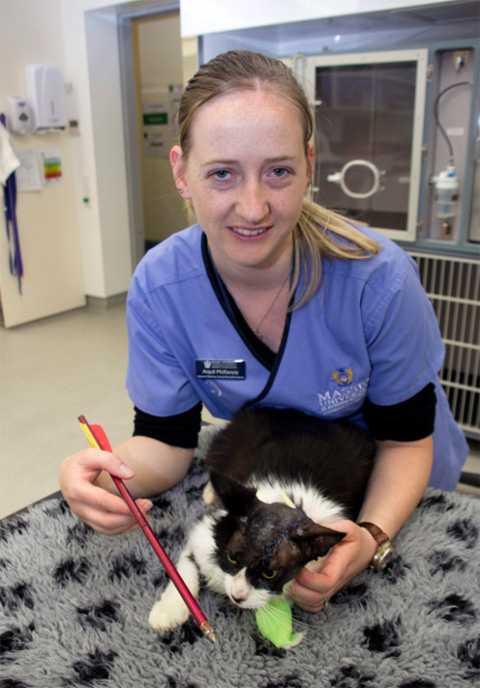 Новозеландская Му-му выжила после того, как ее череп пробила арбалетная стрела