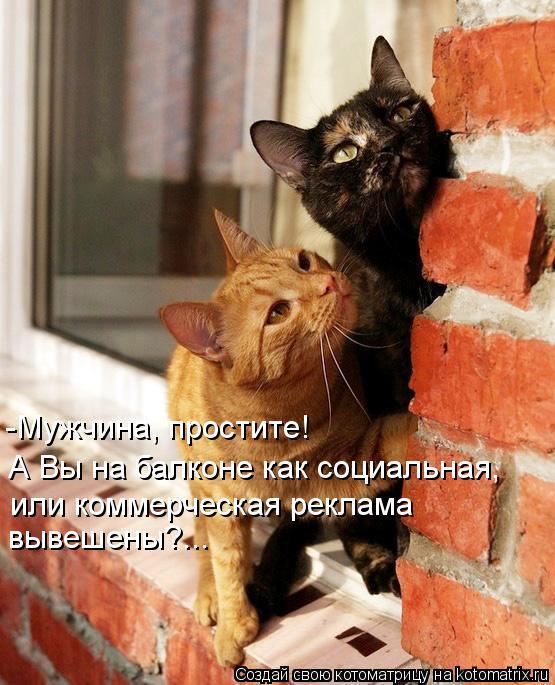 Котоматрица: А Вы на балконе как социальная,  или коммерческая реклама  вывешены?... -Мужчина, простите!