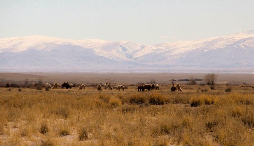 Горный май. Алтайские просторы