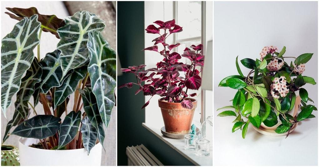 10 самых модных растений 2020 года