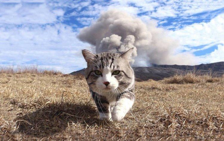Фотогеничный кот, который всегда замечательно выходит на снимках
