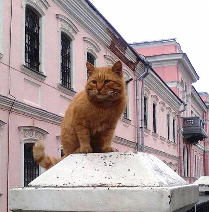 Пять котов, которые устроены…