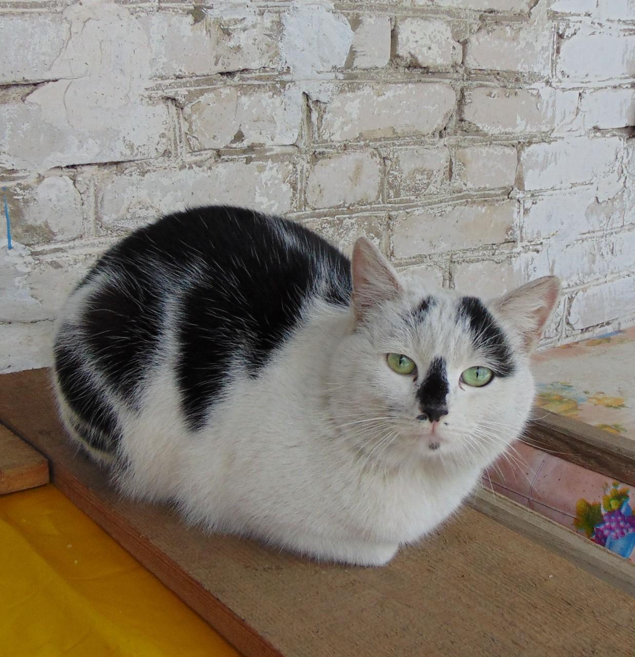 Братья наши меньшие: лечит ли кошка?