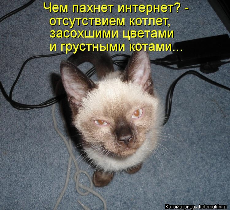 "РАЗВЕСЁЛАЯ ""ЗВЕРоКОТоМАТРИЦА"""