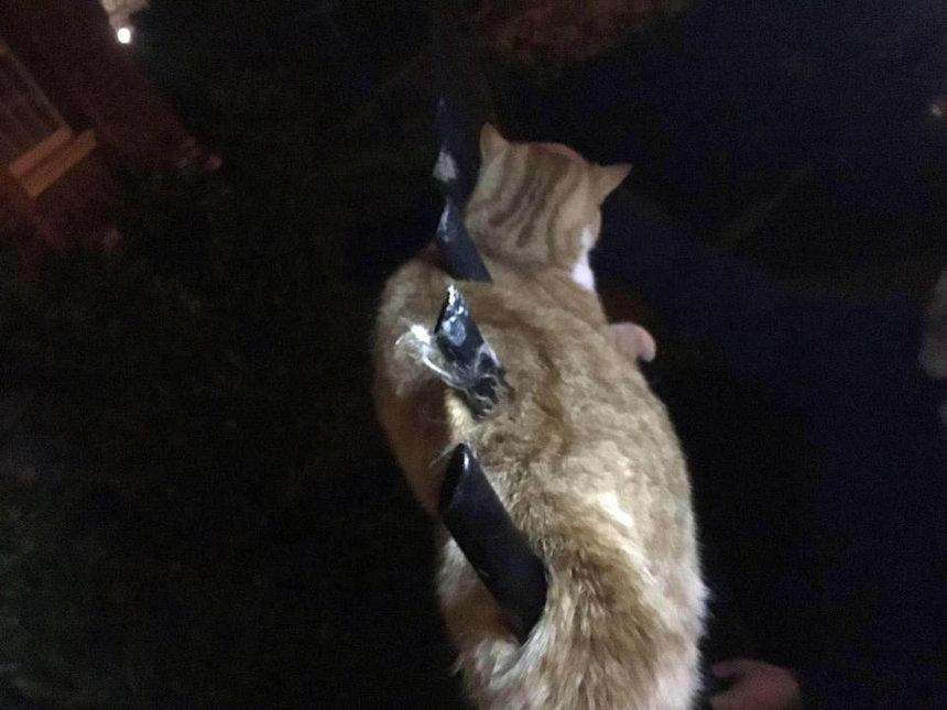 У этого котяры действительно 9 жизней! Я не понимаю как он выжил, после того, как был проколот тремя штырями забора!