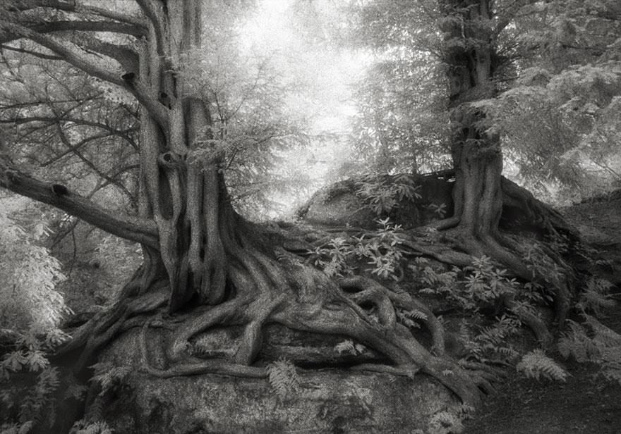 Деревья древние как мир в фотографиях из 14-летнего путешествия-7