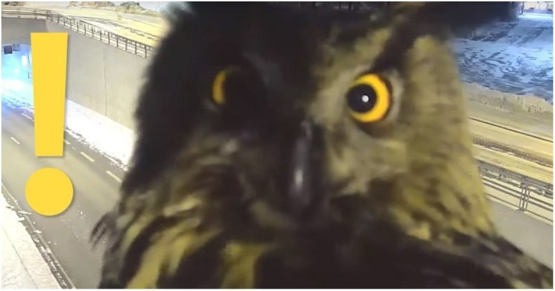 Сова уселась перед камерой видеонаблюдения и помешала полиции следить за порядком на дорогах