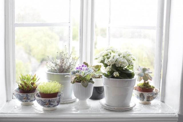5 ролей комнатных растений в интерьере