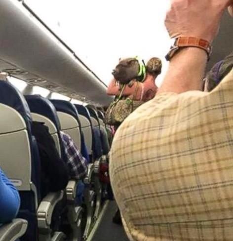 В США из самолета высадили женщину со свиньей