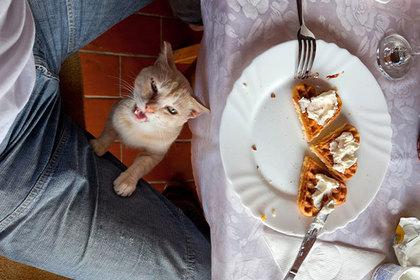 Пора сокращать численность хозяев: Подсчитана прожорливость кошек и собак