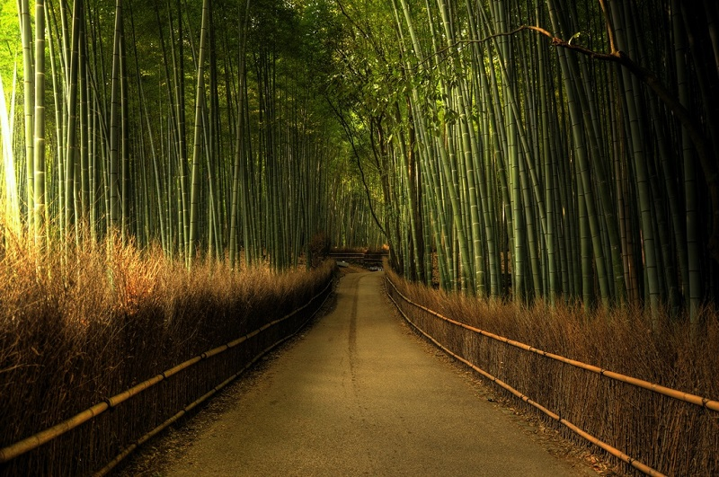 Бамбуковая роща Сагано. Другой вид.