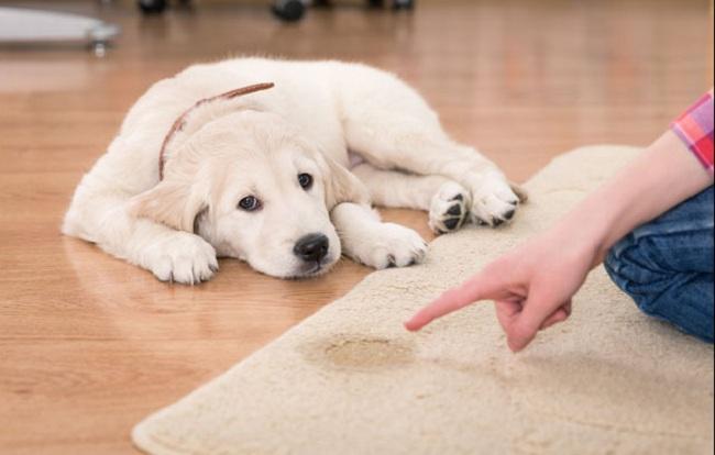 Как вывести запах псины в квартире – 33 способа избавиться от собачьего запаха