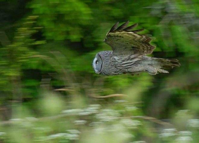 Тест Выбери сову и узнай горькую правду о своем характере