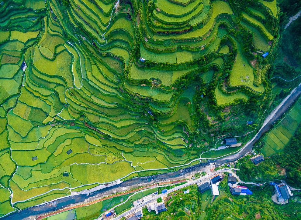 Рисовые террасы в провинции Гуйчжоу
