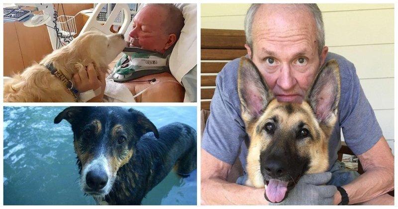 25 невероятных историй о собаках-героях, ставших настоящими ангелами-хранителями