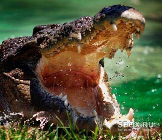 В плену у крокодила