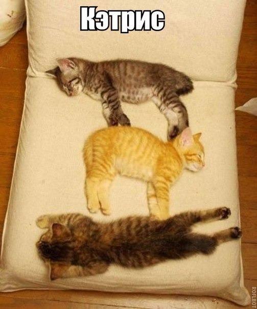 Эти милые и смешные животные)
