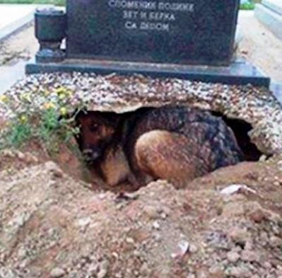 Все думали, что эта собака скорбит по хозяину, пока не увидели, что она прячет под собой