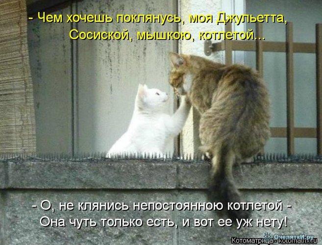 Юморная котоматрица 17