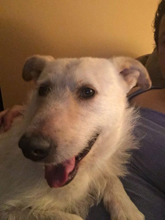 Он ел случайные корки на улицах, а теперь дружит с оленями! История Бадди, добрейшего пса с лимфомой