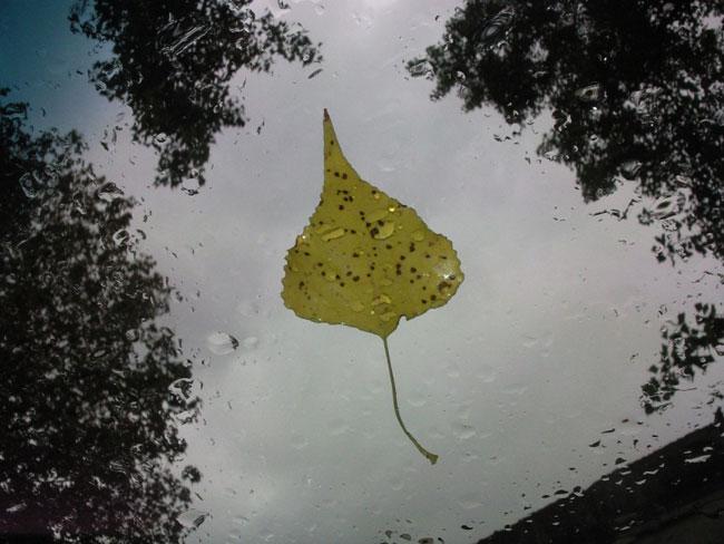 Художник, что рисует дождь...гиперреалистичная живопись от Грегори Тилкера