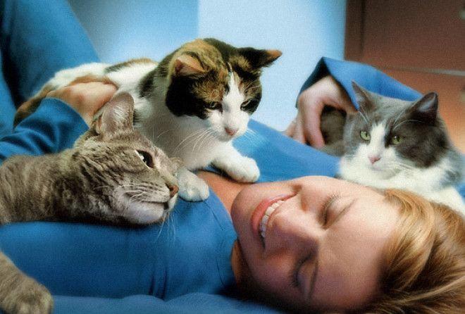 Кошки способны лечить!