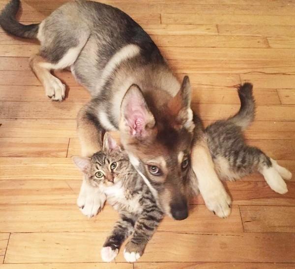 Как собака себе кота выбрала (6 фото)