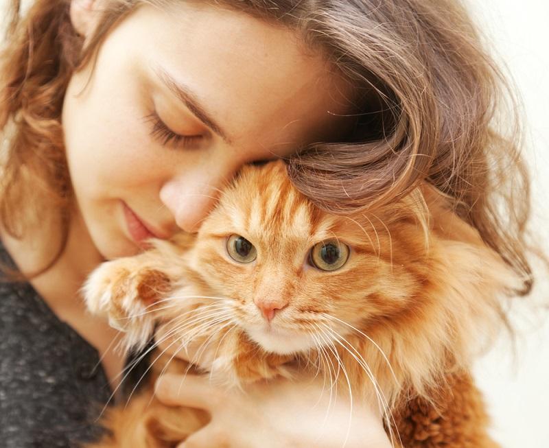кот и его человек