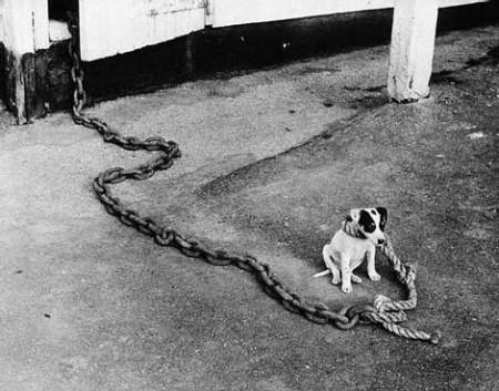 Скорая, собаки, собака - народные новости - новости