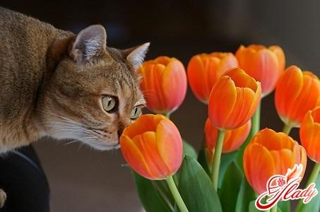 КОШКИН ДОМ. Как лечить бронхиальную астму у кошек