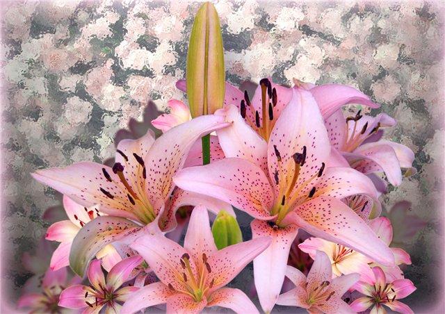 Легенды о цветах: Лилии (640x452, 86Kb)