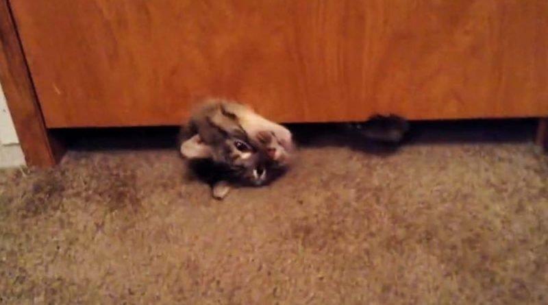 Крупной кошке удалось пролезть под ничтожно узким зазором под дверью