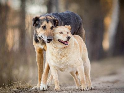 Счастливы вместе: влюбленные собаки четвертый год ищут дом