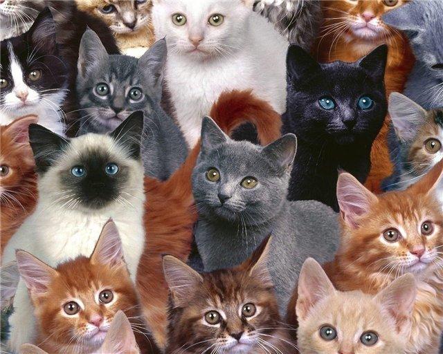 Эти удивительные и забавные кошки.