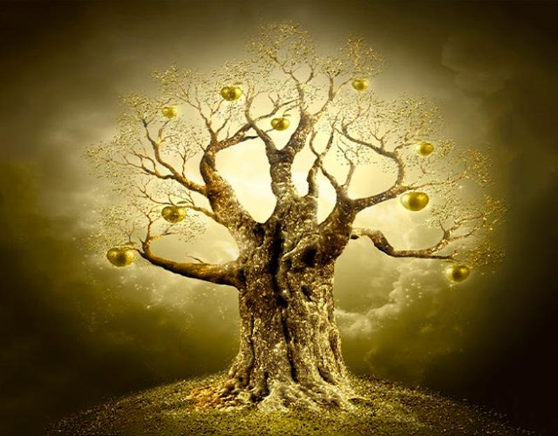 С какого дерева вы упали? Узнайте ваше дерево-покровитель по дате рождения