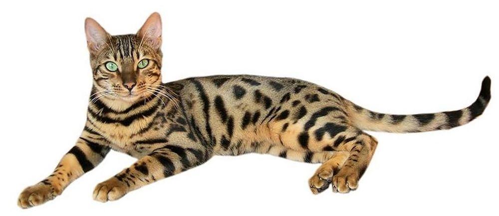 Кошки. Секретные материалы