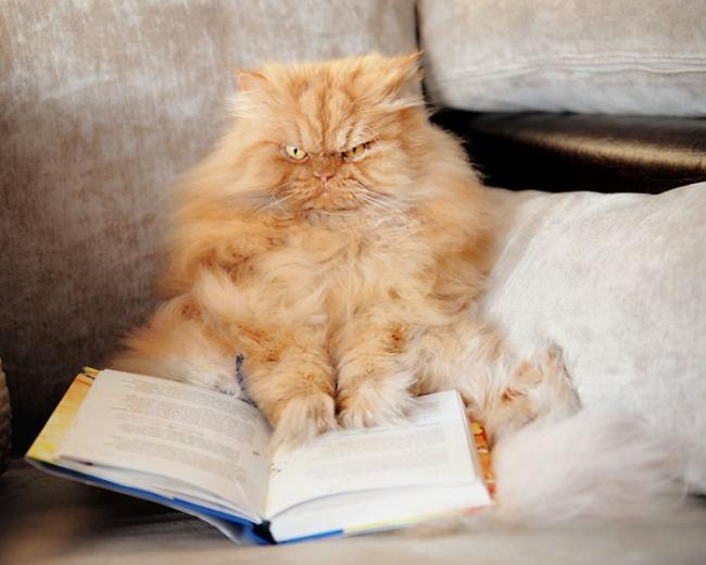 Самый сердитый кот в мире !)