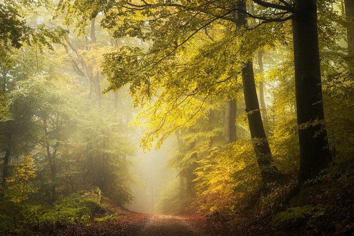 Задумчивая природа в фотогра…