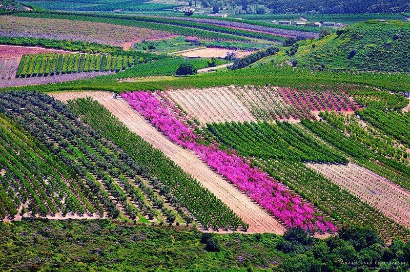 А это - не бескрайние холмы Тоскании, а цветущая Верхняя Галилея на севере Израиля Израиль, красиво, красивые места, природа, страны, страны мира, фото, фотограф